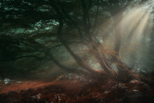 Fantasy Deep Forest With Sun R...