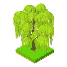 Weeping Willow Icon. Isometric...