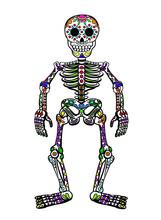 Sugar Skull Skeleton Isolated On White