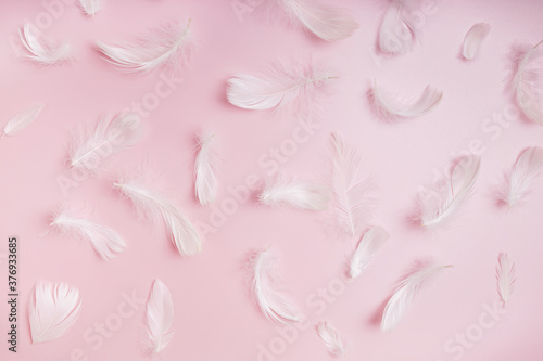 White fluffy bird feathers on pink background Wallpaper Mural