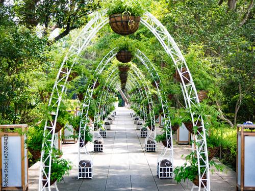 Fototapeta Pergola  zielony-korytarz-w-miejscu-przyjecia-w-ogrodzie