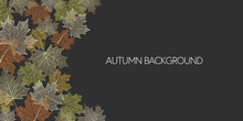 Autumn Skeleton Maple Leaves O...