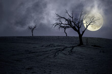 Bare Trees In A Full Moon Night.