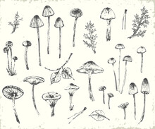 Hand Drawn Ink Botanical Illustration With Plants And Mushrooms