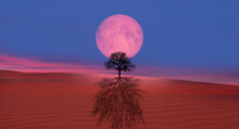 Lone Dead Tree With Lunar Ecli...