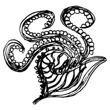 Silhouette Of Stylized Argonaut Mollusk. Cretan Minoan Motif. Isolated Vector Illustration. Hand Drawn Linear Doodle Rough Sketch. Black Silhouette On White Background.