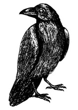 Sketch Of A Crow Black Outline...