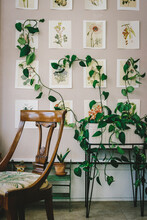 Climbing Plant Behind Chair In...