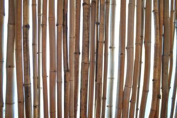 techo bambú