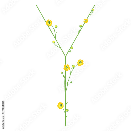 Photo Capital letter Y with buttercup flowers