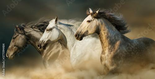 Fototapeta Trois chevaux obraz