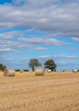 Bales Of Hay In A Newly Cut Field