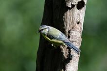 Common UK Garden Birds Feeding.