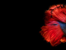 Abstract Fine Art Fish Tail Fr...