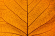 canvas print picture - Extreme close up texture of orange leaf veins