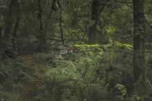 Swineholes Wood. Vibrant Green...