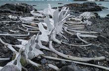 Whale Bones At Jougla Point, A...