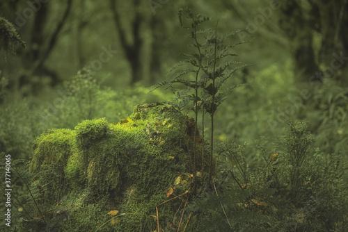 Swineholes Wood Canvas Print