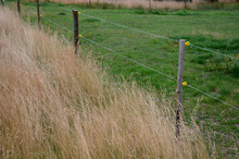 Electric Fence With Plastic Insulators On Wooden Posts. You Can See The Contrast Of Grazed Green Meadows And Tall Old Grass Where Cattle Or Sheep Do Not Get Their Mouths