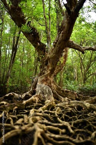Fotografie, Obraz 足の長い木