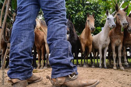 Fotografie, Obraz Vaqueiro e cavalos