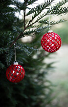 Red Christmas Ball Hanging From Spruce Tree In Garden