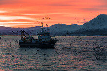 Seagulls Surrounding Fishing Boat On The Ocean With Sunrise