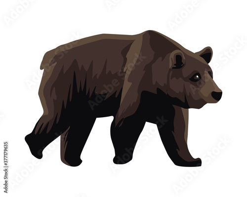 Tela wild bear beast animal icon
