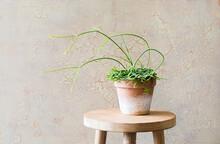Decorative Pot Plant