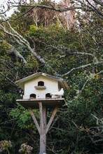 Small White Dove Sitting Perched On A Bird House