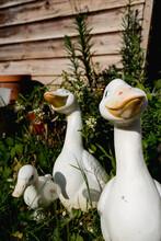 Garden Ducks Decoration