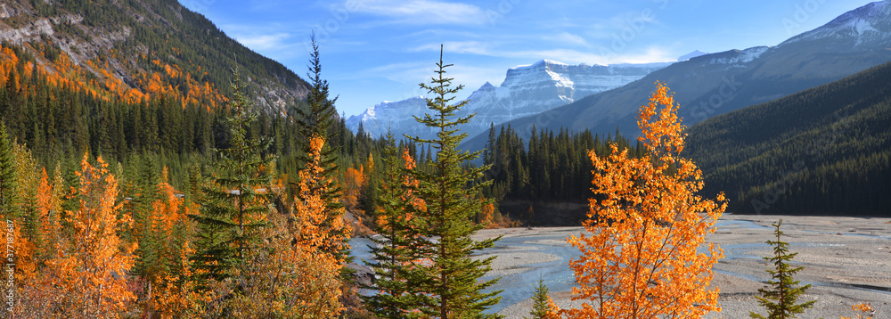 Fototapeta Panoramic view of colorful autumn and pine trees by bow river in rural Alberta,Canada