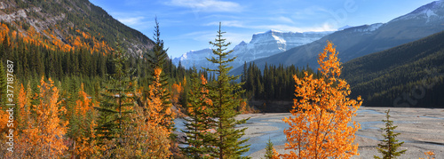Obraz na płótnie Panoramic view of colorful autumn and pine trees by bow river in rural Alberta,C