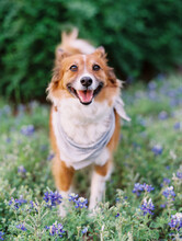Smiling Dog In Flowers