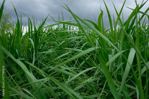 Tall Wild Grass - 377189678