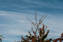 A Group Of Sparrows On The Branches Of A Fruit Tree