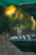 Bird On A Fountain #36