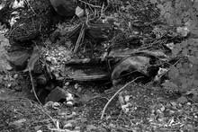 Rostiges Wrack Eines Alten Käfer In Einer Schlucht In Freier Natur In Rudersau Bei Rottenbuch Im Kreis Weilheim-Schongau In Oberbayern, Fotografiert In Klassischem Schwarzweiß