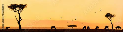 Fototapeta African sunrise panorama obraz