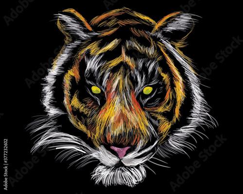 Vászonkép tiger