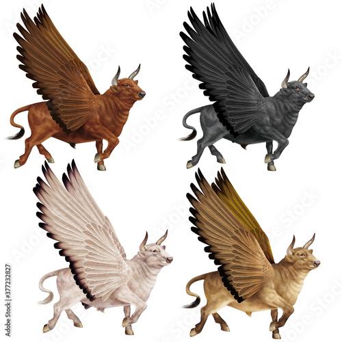 Fényképezés animal, taureau, volant, ailes,  en marche, noir,  coloré, attaque, combat, biso