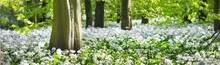 Green Forest And White Bloomin...