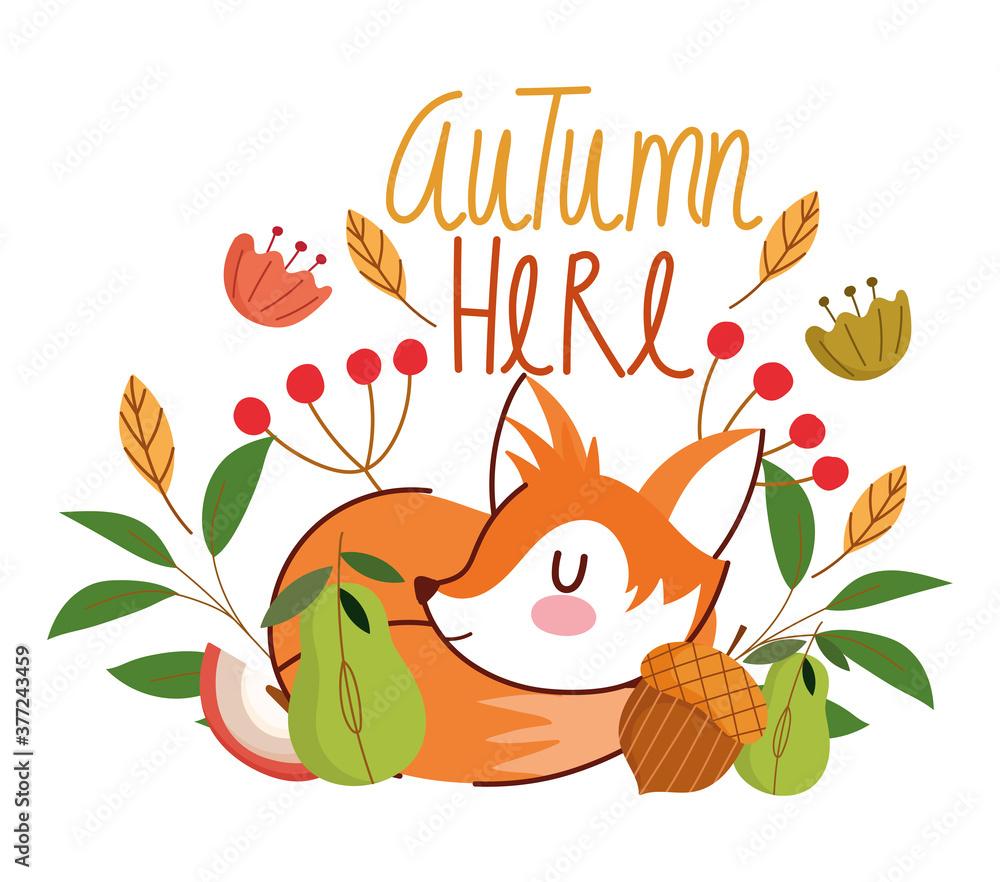 Fototapeta hello autumn, sleeping fox acorn flowers leaves foliage banner