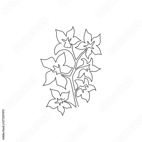 Fotografie, Tablou Single continuous line drawing beauty fresh larkspur for home decor wall art print poster