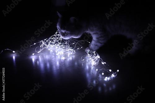 Kat with lights Tableau sur Toile