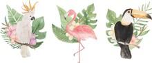 Tropical Bird Watercolor