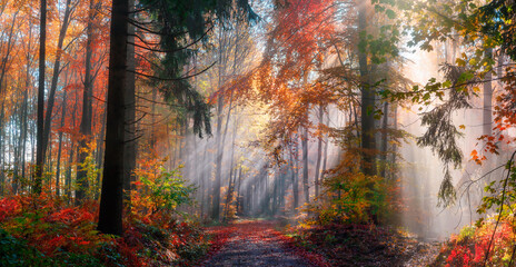 Panel Szklany Las Magical autumn scenery in a dreamy forest, with rays of sunlight beautifully illuminating the wafts of mist and painting stunning colors into the trees
