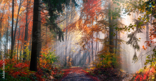 Fototapety pomarańczowe  magical-autumn-scenery-in-a-dreamy-forest-with-rays-of-sunlight-beautifully-illuminating-the