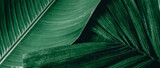 Fototapeta Kawa jest smaczna - tropical green palm leaf and shadow, abstract natural background, dark tone