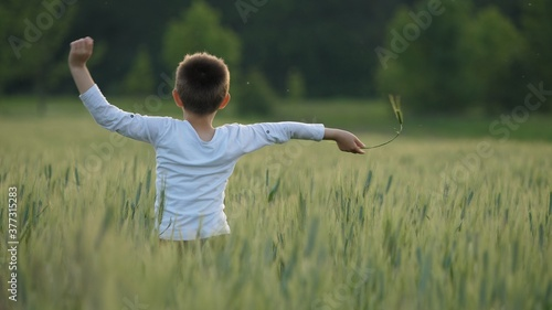 Fotografie, Obraz Child play and run in green wheat field, innocent childhood freedom, slow motion